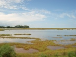 Chincoteague Marshes