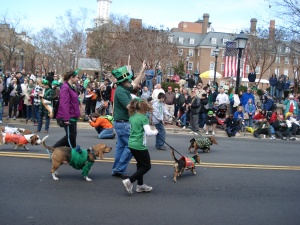 Dogs on parade!